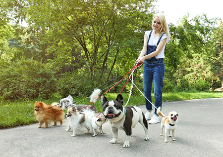 Woman walking dogs in park