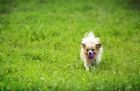 Cute dog on green grass in the park
