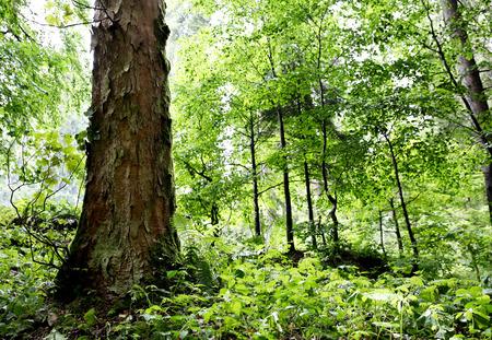 Wild green forest