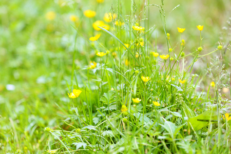 Yellow wildflowers in forest Stock Photo