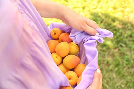 Woman holding many apricots in dress, closeup