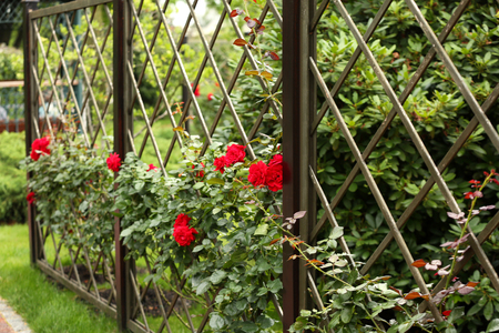 Metal grill with beautiful red roses