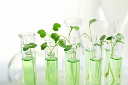 Plants in test tubes on light background Stockfoto