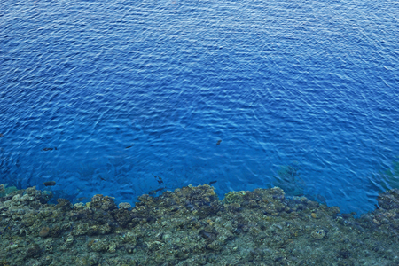 Sea surface with coral reefs