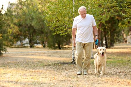 Hombre mayor, y, grande, perro, ambulante, en el estacionamiento
