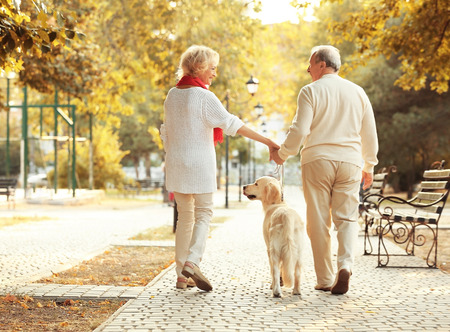 Senior couple and big dog walking in park Stock Photo