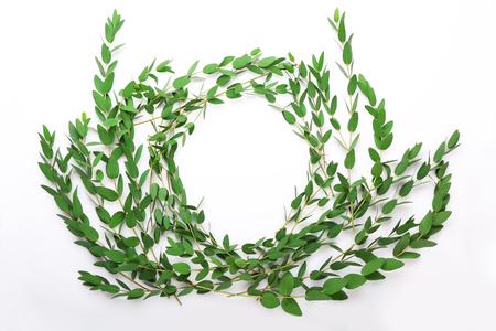 Green eucalyptus branches on white background Stock Photo