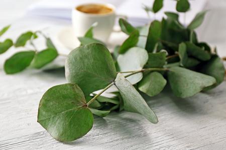 Green eucalyptus branch, closeup
