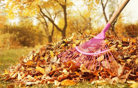 Ventilador rastrillo y montón de hojas caídas en el parque de otoño, vista cercana Foto de archivo