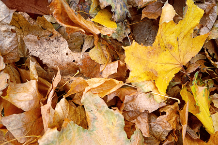 Close up view of fallen leaves in autumn park Banque d'images