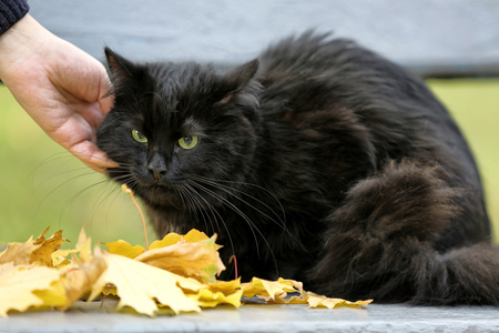 Cute black cat on bench in autumn park, close up view