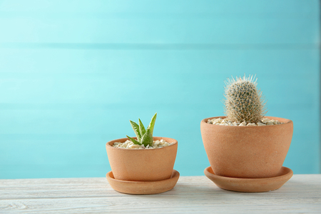 Pots with succulents on blue background