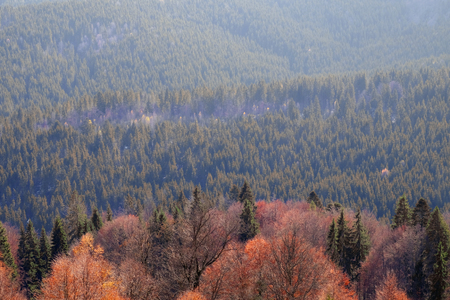 View of beautiful landscape with coniferous forest Stock Photo