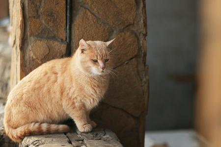 Cute calm tabby cat outdoors Stock Photo