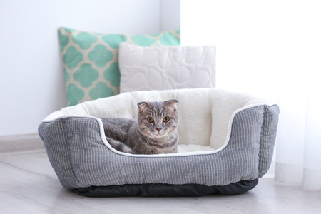 Cute funny cat in bed at home Stock Photo