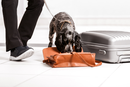 Dog looking for drugs in airport Banque d'images - 108759209