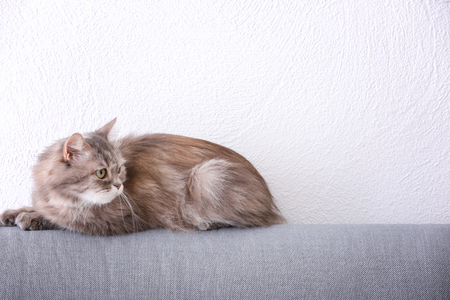 Cute funny cat on armchair at home