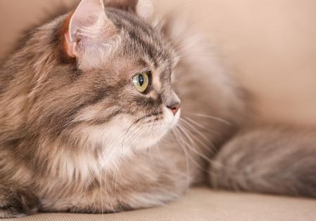 Cute funny cat on beige sofa, closeup