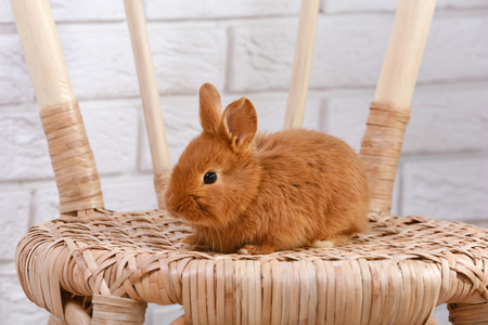 Cute funny rabbit on wicker chair against light brick wall