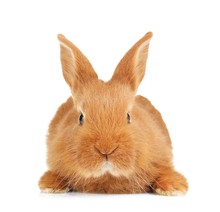 Cute funny rabbit on white background Banque d'images