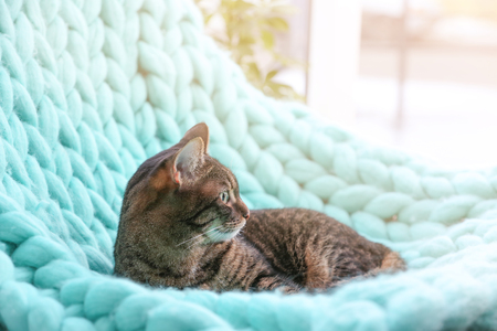 Cute funny cat lying on knitted plaid at home Stock Photo