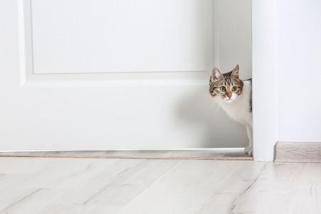 Cute funny cat walking through door at home