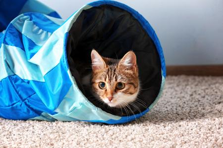 Lindo gato gracioso jugando en casa