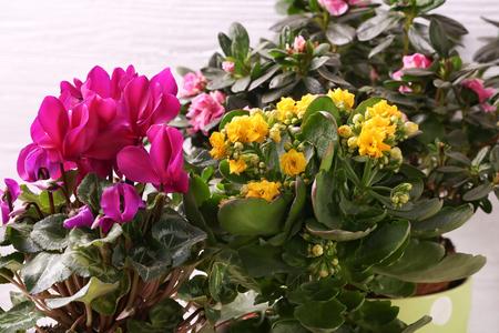 Beautiful flowers, closeup Stock Photo