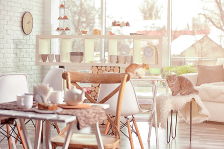 Beautiful interior of modern cat cafe