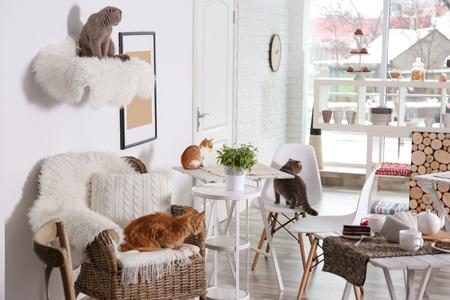 Piękne wnętrze nowoczesnej kawiarni dla kotów