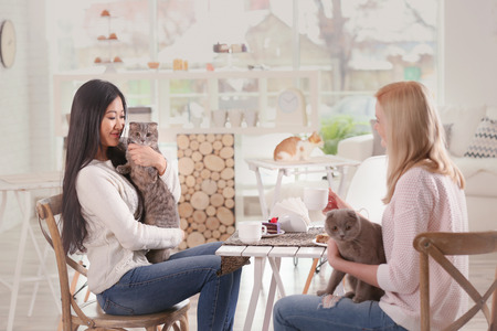 Happy women resting in cat cafe 스톡 콘텐츠