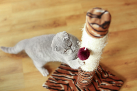 Cute cat sharpening claws on scratching post Foto de archivo