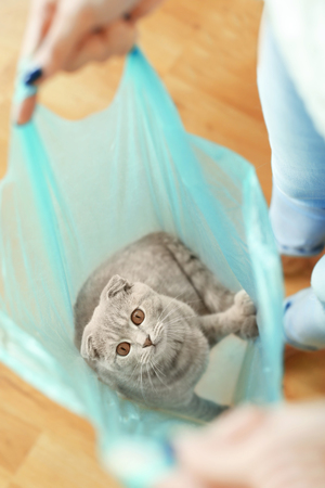 Woman playing with cat sitting in plastic bag