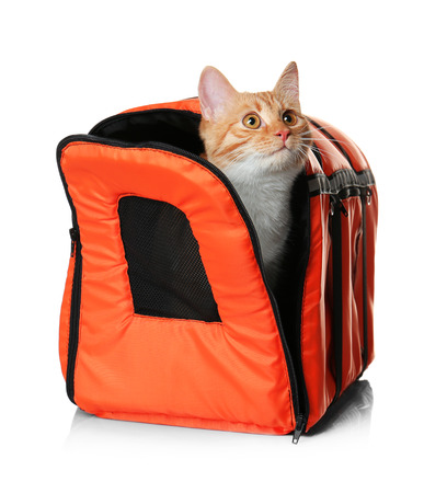 Foxy cat inside carrier box on white background Stock Photo