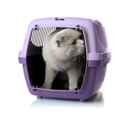 Cute funny cat in plastic carrier on white background Stock Photo