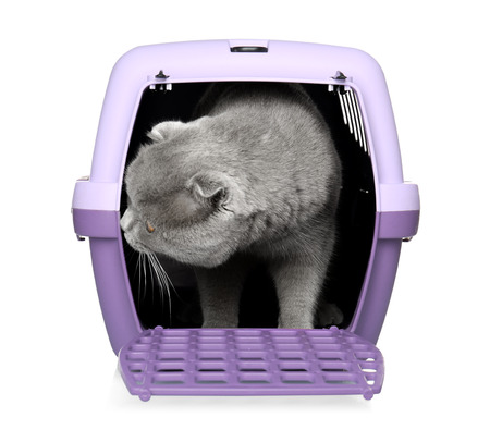 Cute funny cat in plastic carrier on white background 스톡 콘텐츠