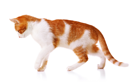 Cute funny cat isolated on white background 스톡 콘텐츠