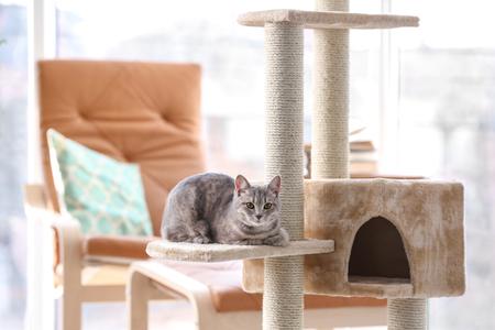 Árbol y lindo gato gracioso en la habitación Foto de archivo