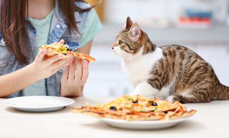 Young woman and cute cat eating tasty pizza in kitchen Foto de archivo