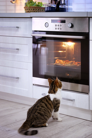 Cute cat looking at tasty pizza in oven Archivio Fotografico