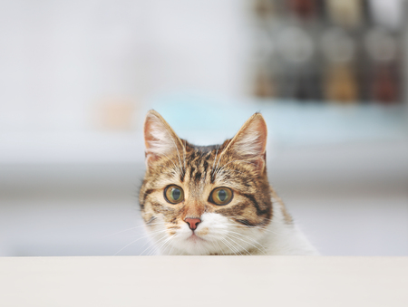 Cute funny cat at kitchen table on blurred background Фото со стока