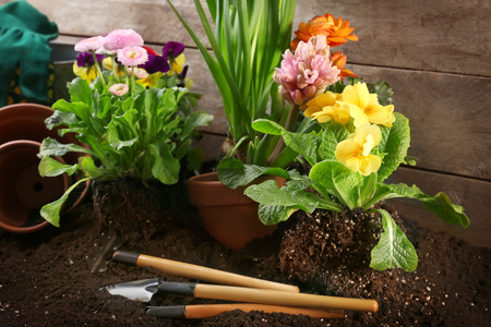 Composition with beautiful flowers and gardening tools