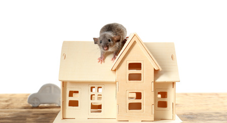 Cute funny rat and decorative house model on wooden table against white background Reklamní fotografie