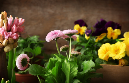 Composition with beautiful flowers in pots, closeup Stok Fotoğraf