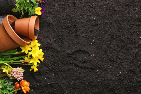 Composition with plants and pots on soil background Stok Fotoğraf
