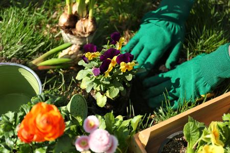Woman planting flowers in garden Standard-Bild