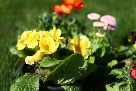 Beautiful flowers in pots outdoors on sunny day, closeup