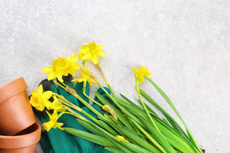 Composition with flowers and gardening tools with space for text Stock Photo