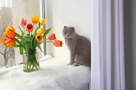 Cute cat with flowers on window sill