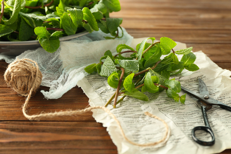Lemon balm with scissors on wooden table Stock fotó